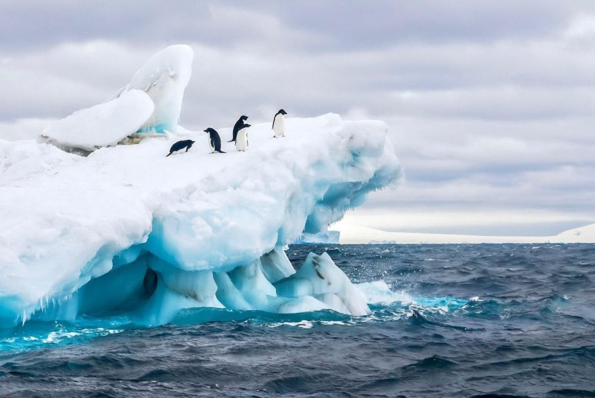 Antarctica has just recorded temperatures of above 20C for the first time in history. 5 things we can do at home to fight climate change.